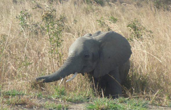 タンザニアのかわいい小像